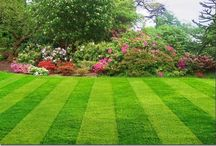 Outdoor: Lawn Care