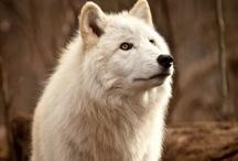 Wolves / by Ginnie Ramirez