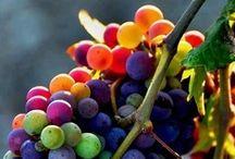 Frutas / by Gloria Marie Briones