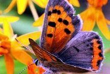 Animali - Farfalle