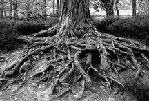 Raíces y árboles