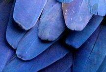 COLOR |Blue