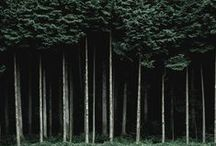 NATURE | Wood