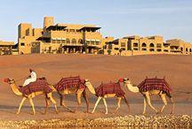 Deserto e cammelli e emirati arabi