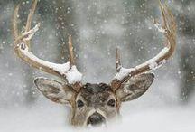 Téli szépségek
