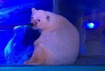 Grandview Aquarium Animal Cruelty