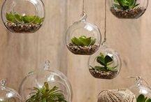 wnętrze+rośliny