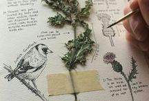 ilu-flora i fauna