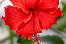 Flower... / flower