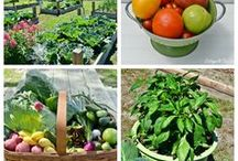 Vegetable & Herb Gardening / You are what you eat so you might as well eat homegrown!