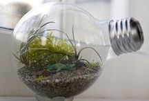 Terrariums / Terrariums are tiny self contained worlds and they are too cool not to have one of your own!