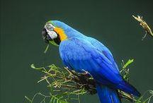 Parrot colors study
