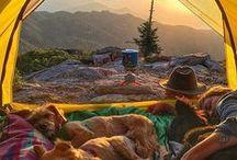 Kamperen met de hond / #Kamperen #Camping #Hond #Vakantie #Camper