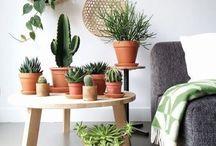 // plants