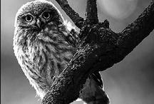 [ Bird ] / Gathering Bird Pictures.