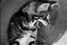 [ Feline ] / by Masters Photographe[r]