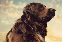 Dog / by Jim Spagle