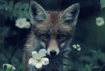 Fox / by Jim Spagle