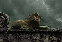 Wild Cat / by Jim Spagle