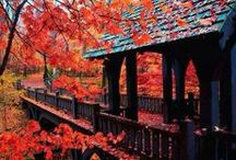 Covered Bridge / by Jim Spagle