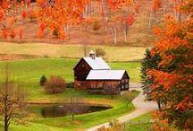 Colorful Autumn / by Shorena Ratiani