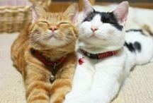 Funny cats ...  and some others  ...... / Les animaux et les chats en particulier nous apprennent à vivre l'instant présent ................... c'est un grand cadeau !!!!!!!! / by Evelyne Champange