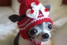 Cuteness Alert!!