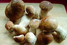 Recepty - houby