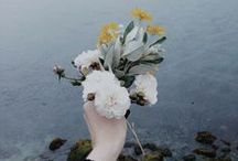 Kingdom of Blooms / by Rebecca Tie