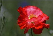 Flower Fine Art Photography Artwork / Beautiful flower fine art photography and flower portrait photography.