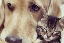 Cute!!! :3 / Because what brightens your day more than animals?