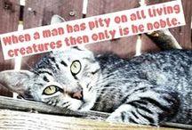 Lets Stop Animal Cruelty
