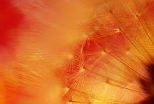 WARM COLORS Palettes / Warm, soft colors, the energy of orange, the brightness of the yellow, red passionate and seductive.Want to pin here? Leave a comment and we will invite you!   Tonalità calde e avvolgenti, l'energia dell'arancio, la luminosità del giallo, il rosso passionale e seducente.Vuoi mettere i tuoi pin qui? lascia un commento e ti inviteremo!