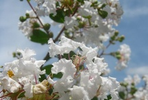 Our Flowering Trees and Plants / Check out the flowering trees and plants we offer through our website
