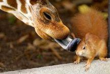 Odd couples & funny expressions!;) / tenere amicizie 'bestiali' ..amori impossibili e buffissime espressioni!;) / by Flory