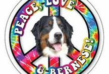 Bernese Mountain Dog Stuff / Pics and Gift ideas for Bernese owners.