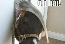 Hai Horsie! / Horse and Equestrian-themed board. We'll also let a few donkeys and burros in now and then.