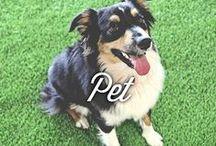 AGL Pet Pads / Your Pets Deserve The Best!