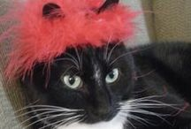 Cats in Hats / Cats in hats or clothing / by Maria