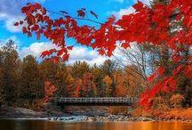 Fall / by Elisa Bentley