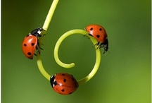 for the love of ladybirds