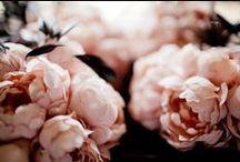 Flowers/Botanic