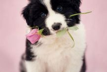 ❤️Cutest Dogs&Puppies 2 / by 🐣💕💐Annie🌷🐥🎀