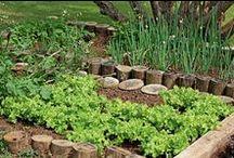 Gardens / Sobre hortas e jardinagem.