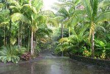 GARDENS - Beautiful Gardens / Ideas, how to