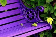 ~ Green and Purple ~ / by Lynda Owen
