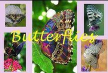 Butterflies / by Stormy Knight
