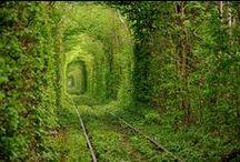 Groene tunnels