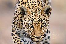 NAMIBIA / VIAGGI