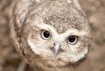 Magical owls